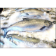 Fresh Wild King Salmon Fish Steaks (500g)